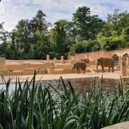 Blick in die Elefantenanlage im Erlebniszoo Hannover