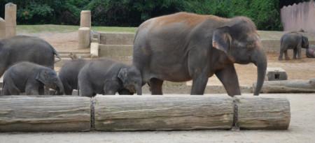 Elefanten im hannoverschen Zoo